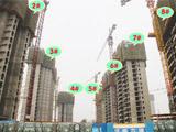 九洲城8月项目进度